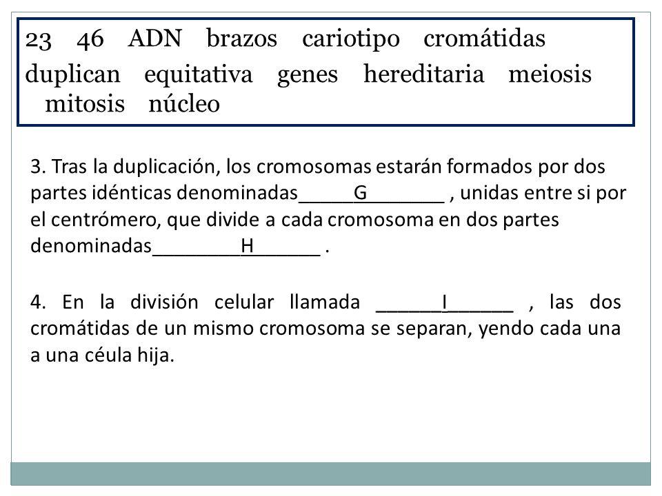 23 46 ADN brazos cariotipo cromátidas