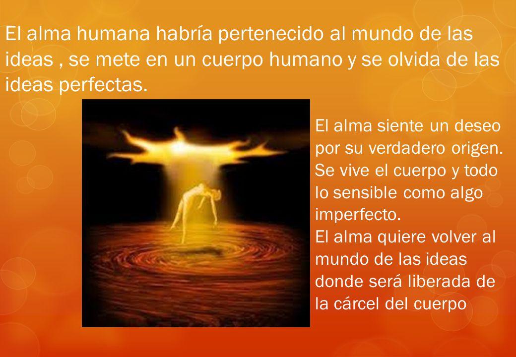 El alma humana habría pertenecido al mundo de las ideas , se mete en un cuerpo humano y se olvida de las ideas perfectas.
