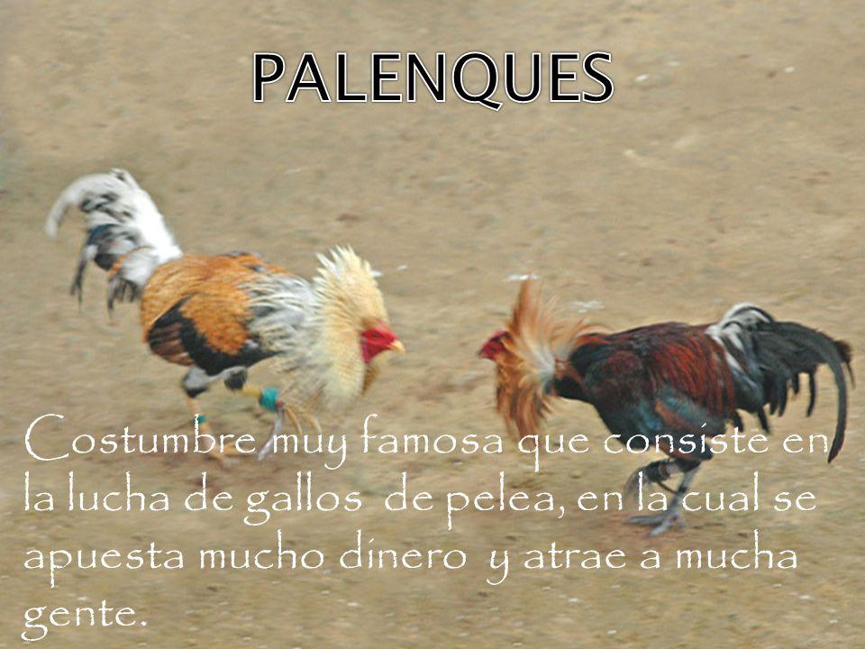 PALENQUES Costumbre muy famosa que consiste en la lucha de gallos de pelea, en la cual se apuesta mucho dinero y atrae a mucha gente.