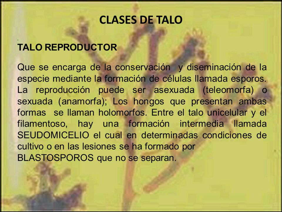 CLASES DE TALO TALO REPRODUCTOR