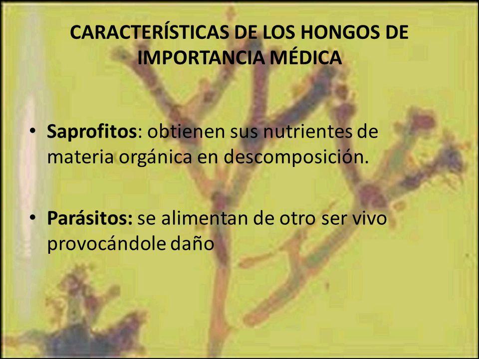CARACTERÍSTICAS DE LOS HONGOS DE IMPORTANCIA MÉDICA