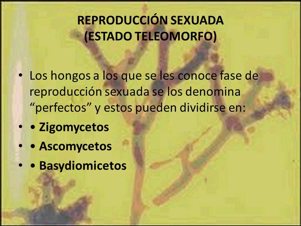 REPRODUCCIÓN SEXUADA (ESTADO TELEOMORFO)