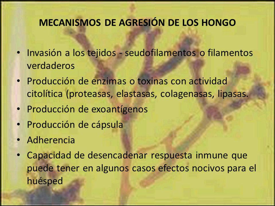 MECANISMOS DE AGRESIÓN DE LOS HONGO