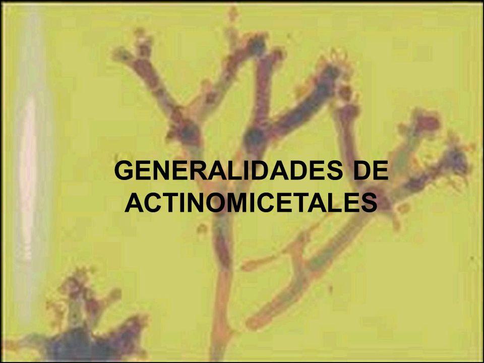 GENERALIDADES DE ACTINOMICETALES