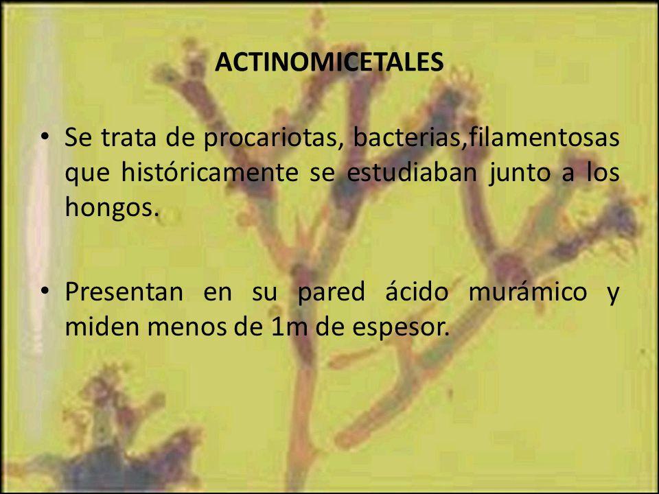ACTINOMICETALES Se trata de procariotas, bacterias,filamentosas que históricamente se estudiaban junto a los hongos.