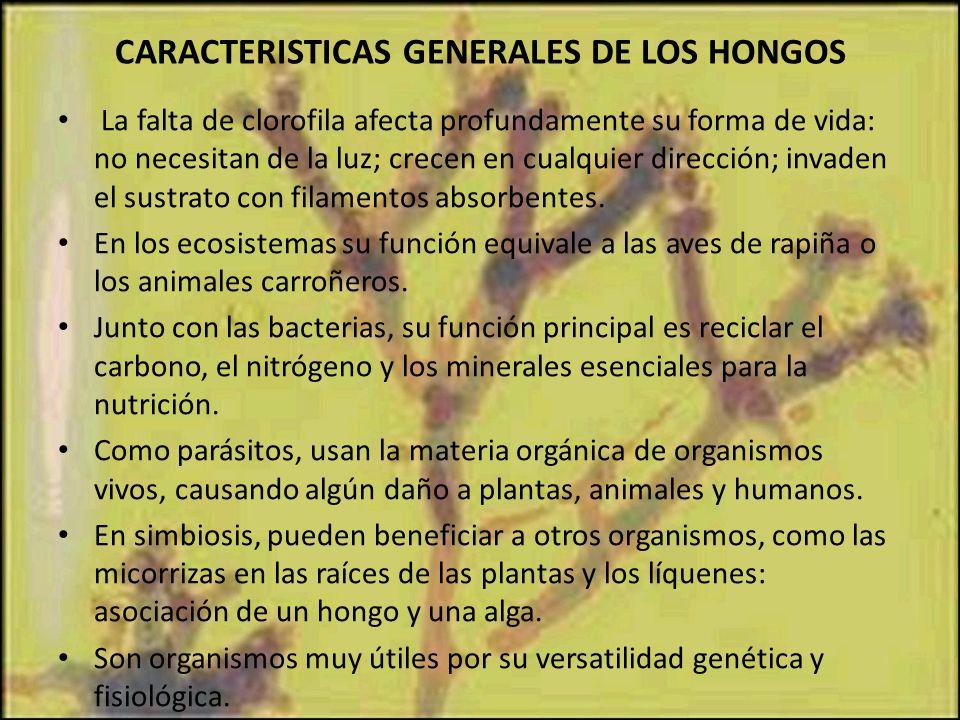 CARACTERISTICAS GENERALES DE LOS HONGOS