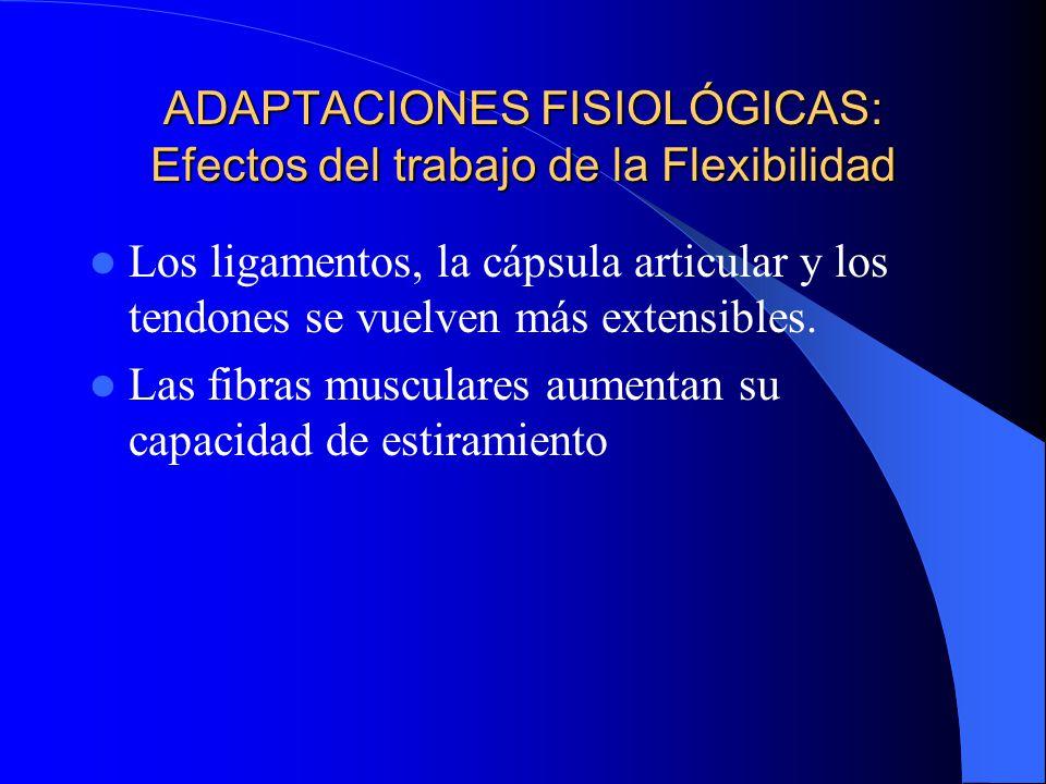 ADAPTACIONES FISIOLÓGICAS: Efectos del trabajo de la Flexibilidad