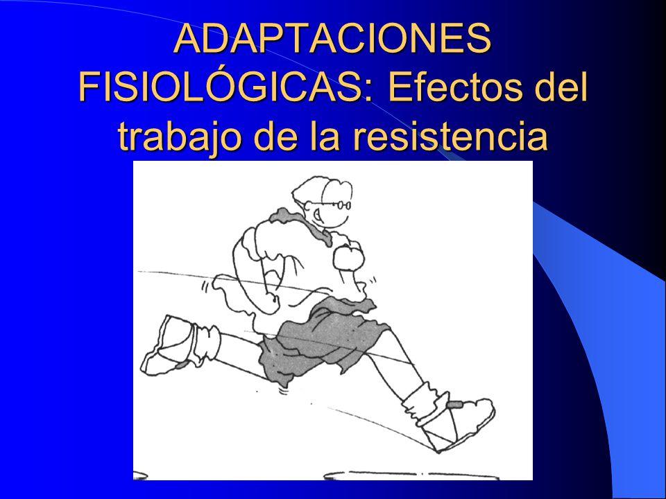 ADAPTACIONES FISIOLÓGICAS: Efectos del trabajo de la resistencia