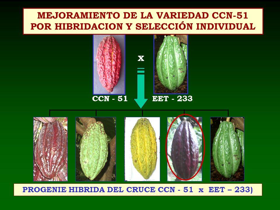 PROGENIE HIBRIDA DEL CRUCE CCN - 51 x EET – 233)