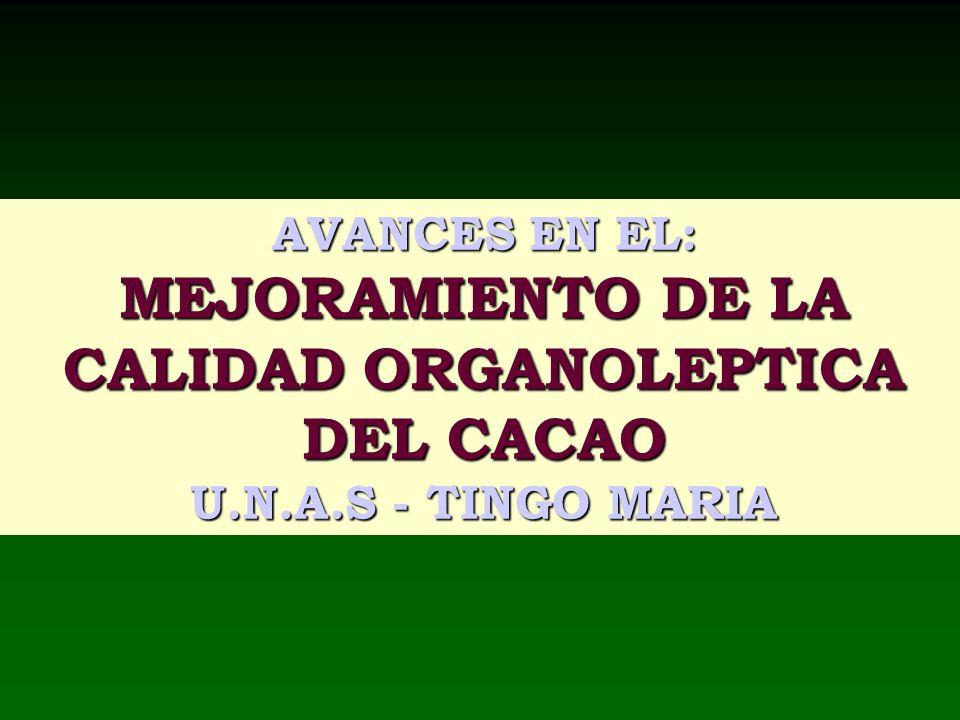 CALIDAD ORGANOLEPTICA DEL CACAO