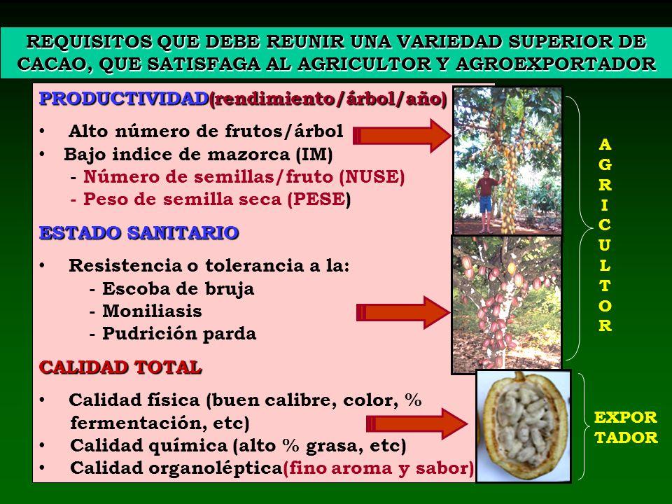 PRODUCTIVIDAD(rendimiento/árbol/año) Alto número de frutos/árbol