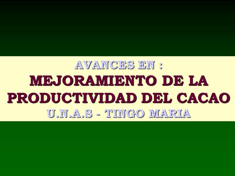 PRODUCTIVIDAD DEL CACAO
