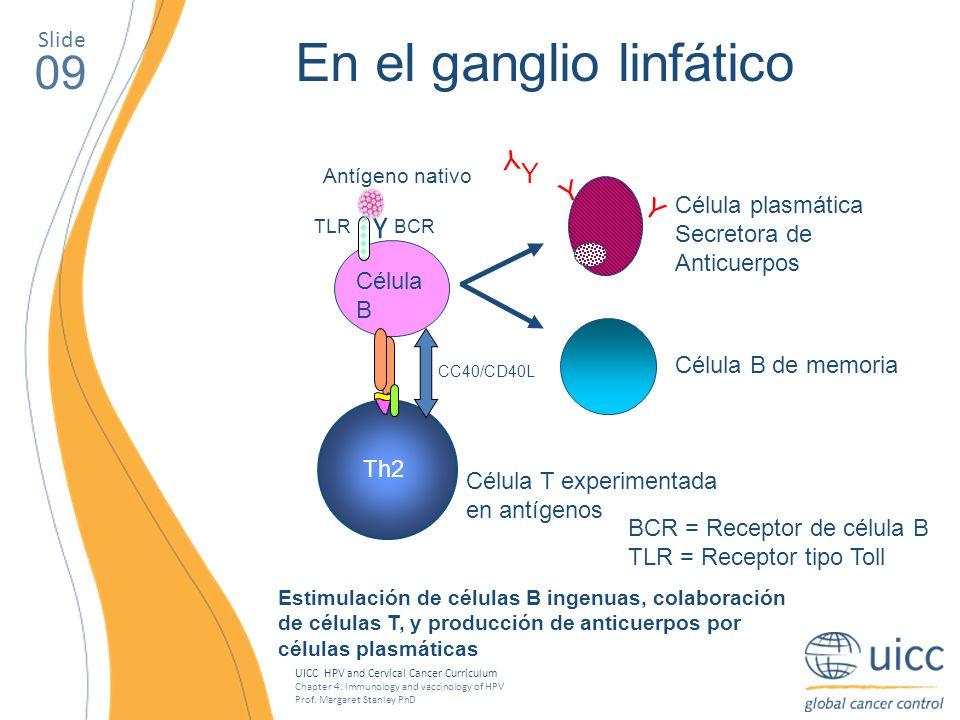 En el ganglio linfático