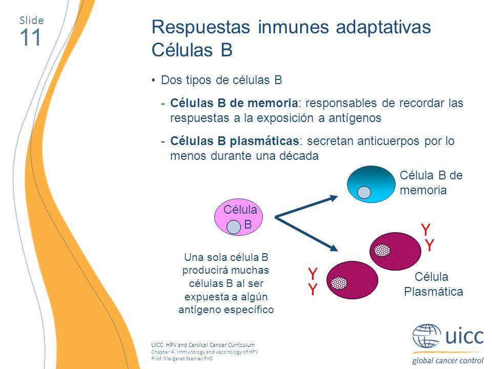 11 Respuestas inmunes adaptativas Células B Y Y Y Y Slide