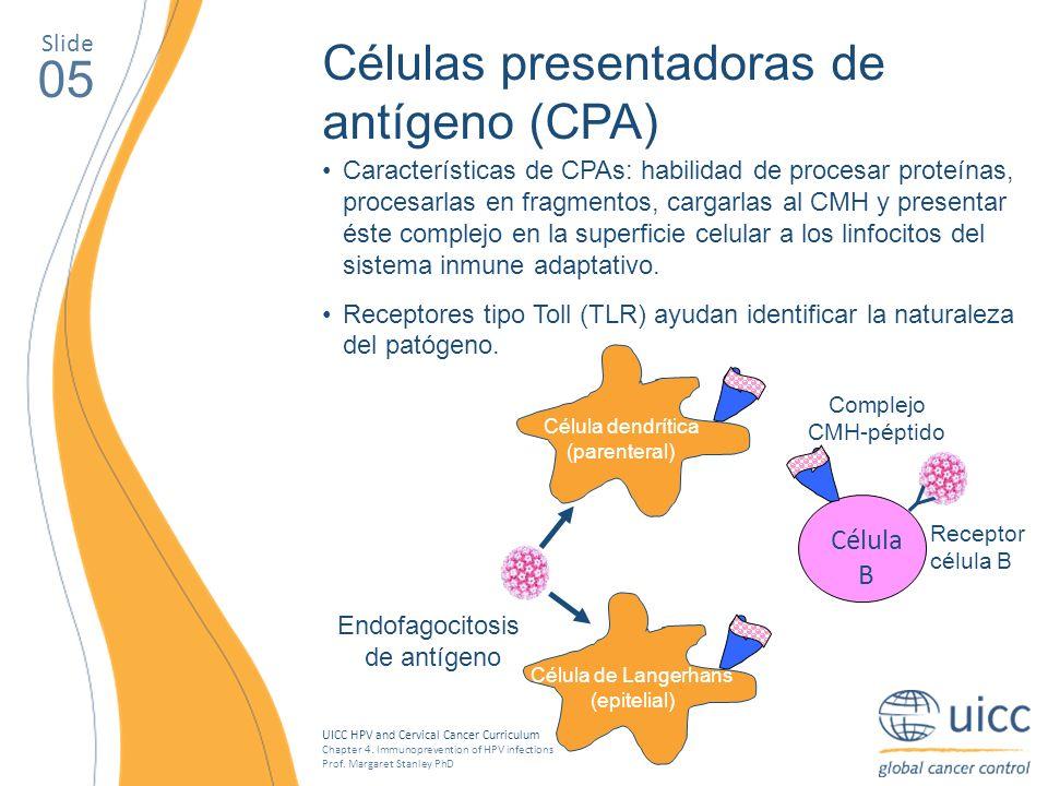 05 Células presentadoras de antígeno (CPA) Y Célula B Slide