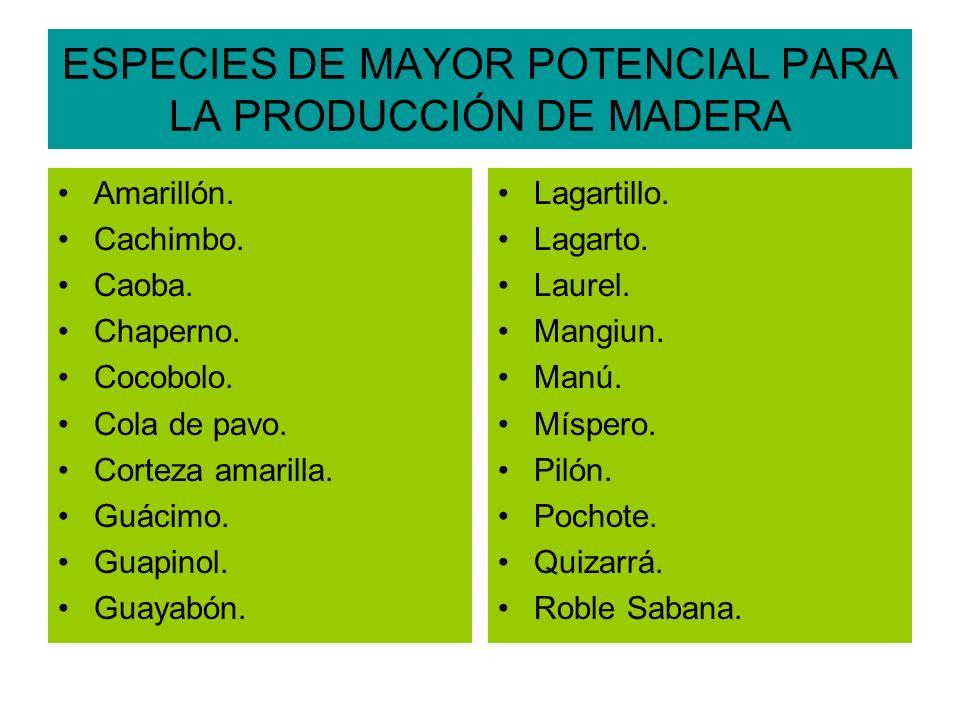 ESPECIES DE MAYOR POTENCIAL PARA LA PRODUCCIÓN DE MADERA