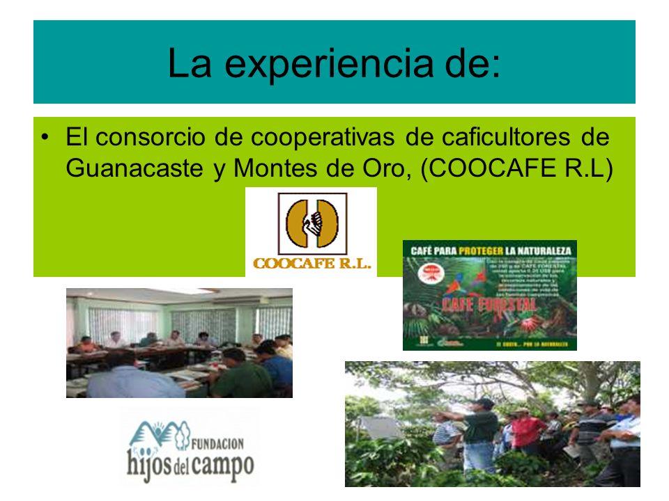 La experiencia de: El consorcio de cooperativas de caficultores de Guanacaste y Montes de Oro, (COOCAFE R.L)