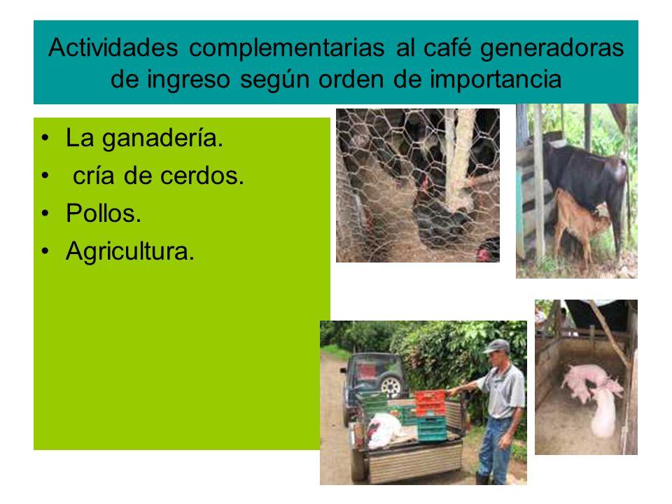 Actividades complementarias al café generadoras de ingreso según orden de importancia