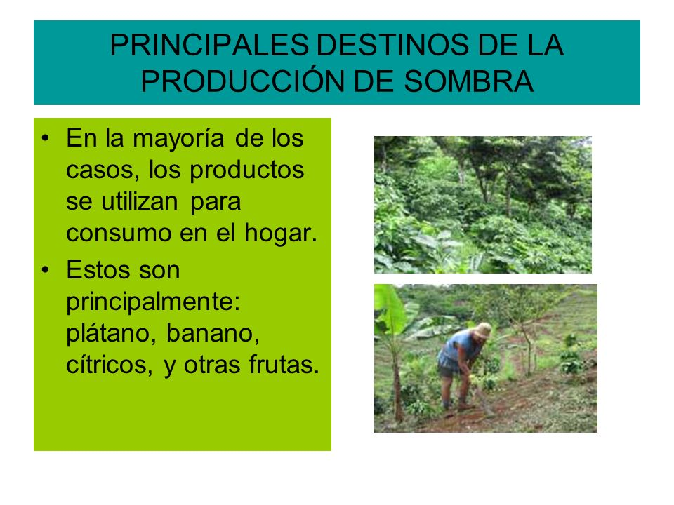 PRINCIPALES DESTINOS DE LA PRODUCCIÓN DE SOMBRA