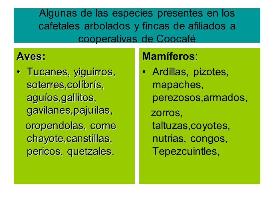 Algunas de las especies presentes en los cafetales arbolados y fincas de afiliados a cooperativas de Coocafé