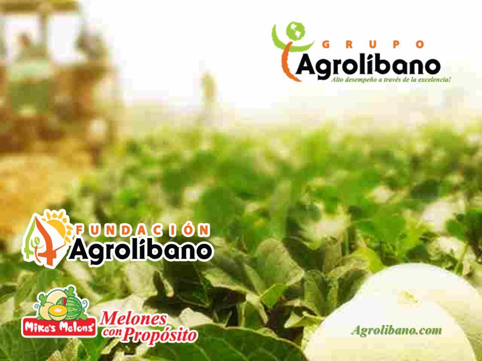 Agrolibano.com