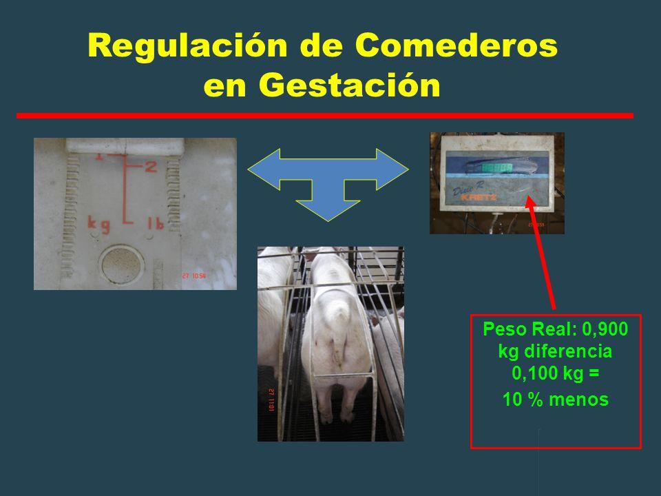 Regulación de Comederos en Gestación