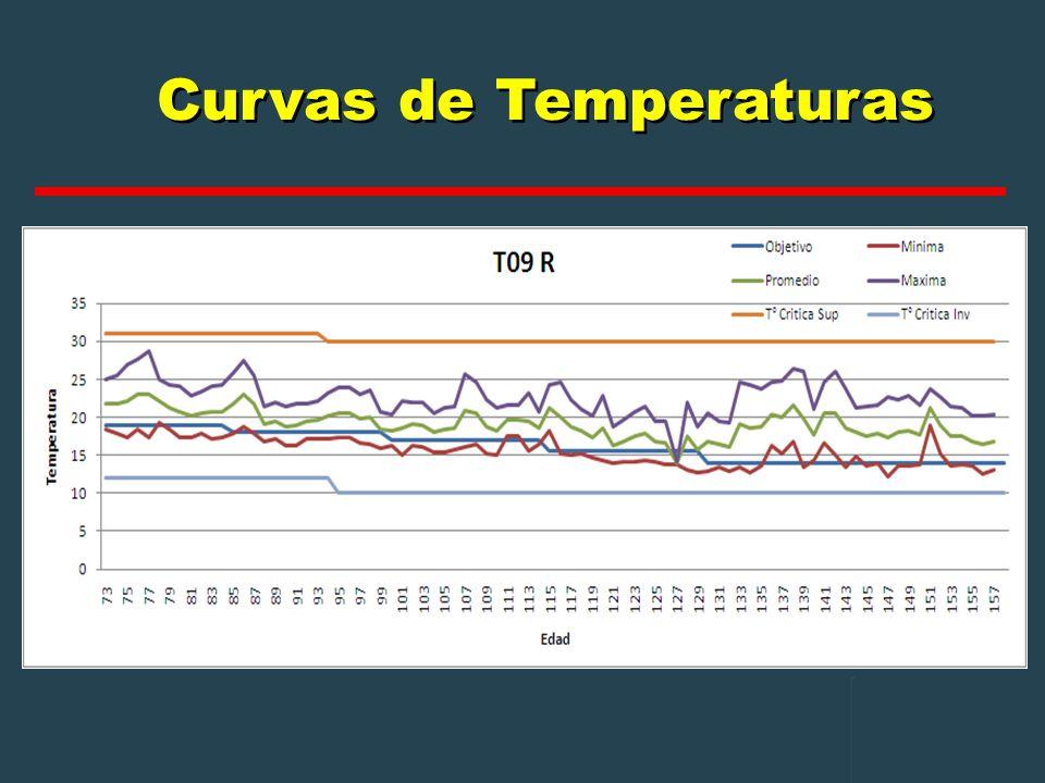 Curvas de Temperaturas