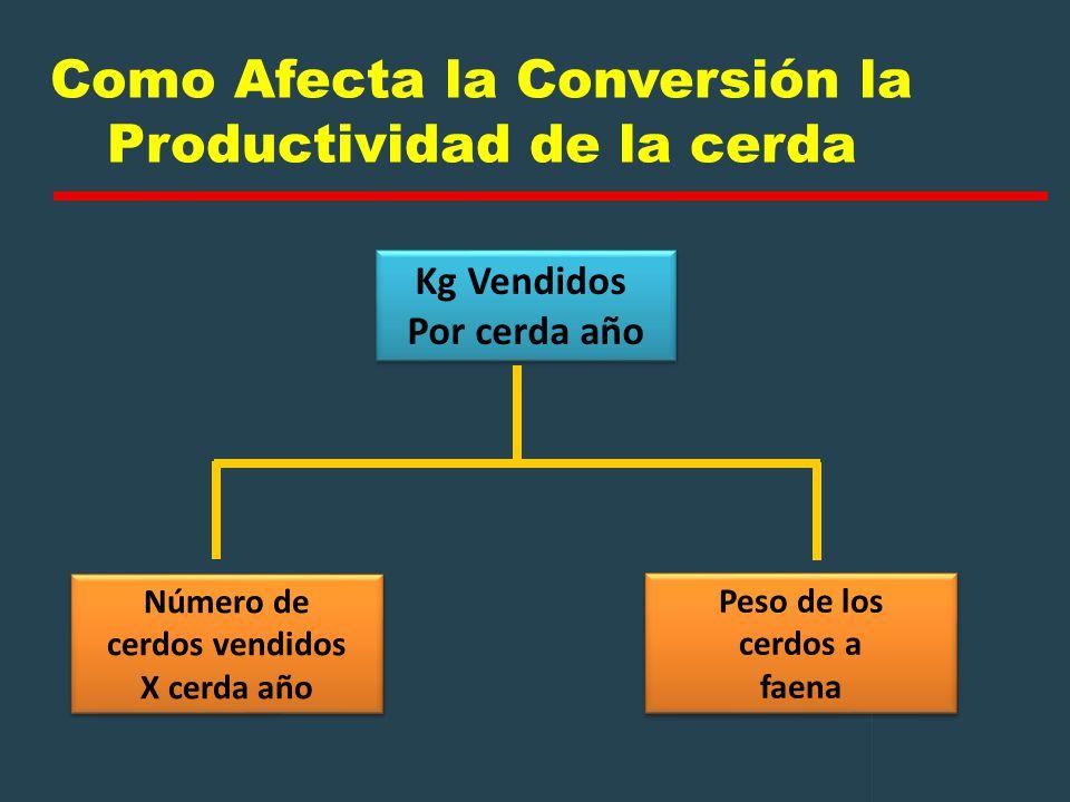 Como Afecta la Conversión la Productividad de la cerda