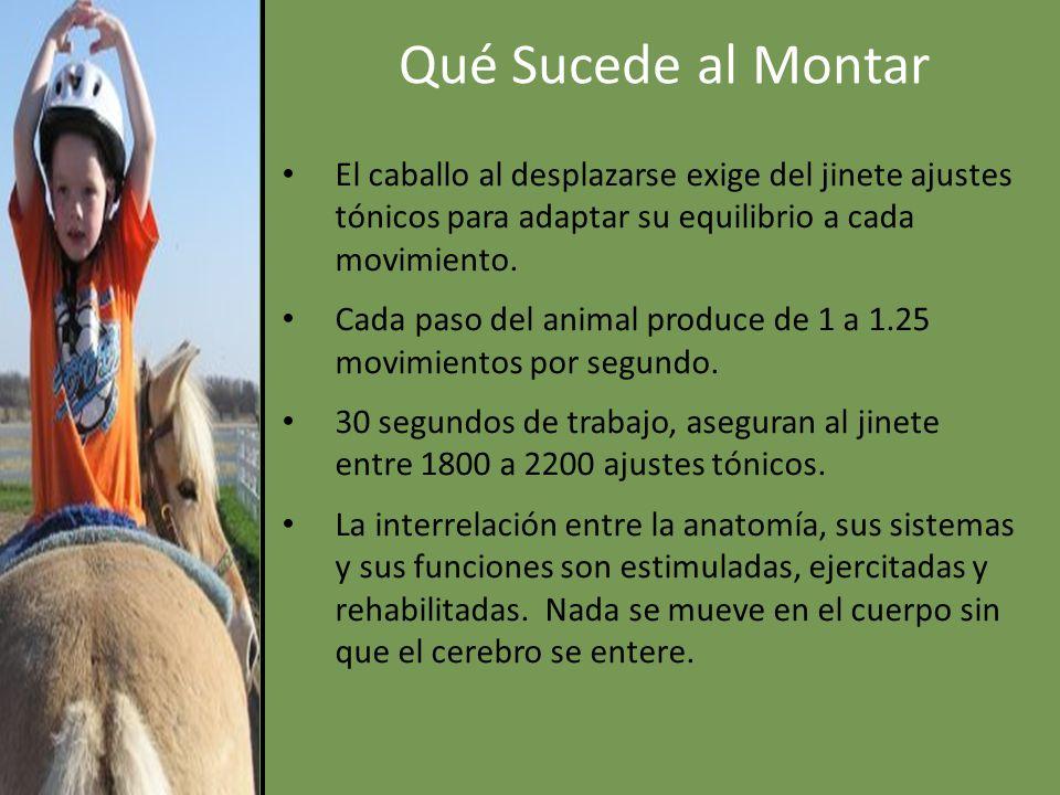 Qué Sucede al Montar El caballo al desplazarse exige del jinete ajustes tónicos para adaptar su equilibrio a cada movimiento.
