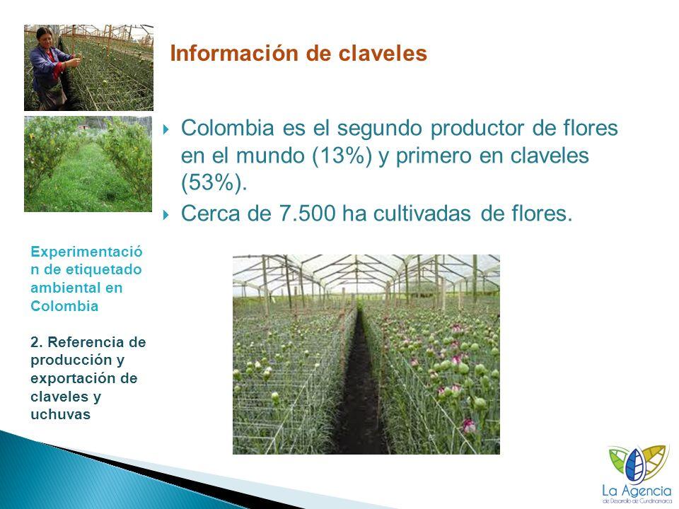 Información de claveles