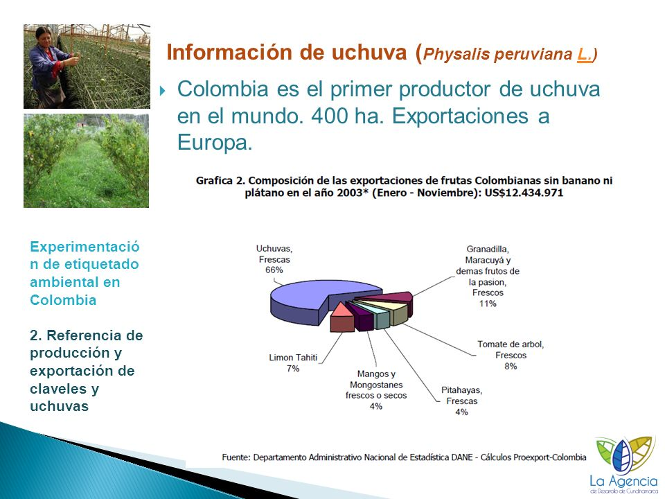 Información de uchuva (Physalis peruviana L.)