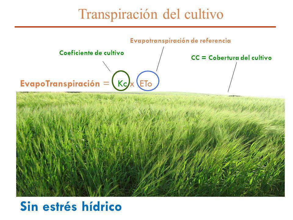 Transpiración del cultivo
