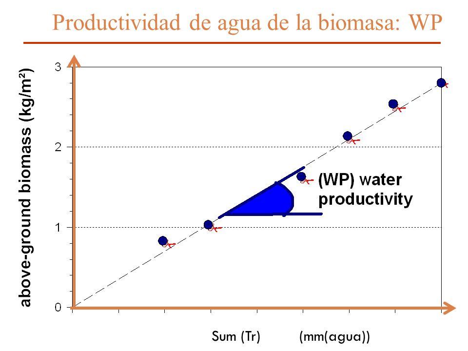 Productividad de agua de la biomasa: WP