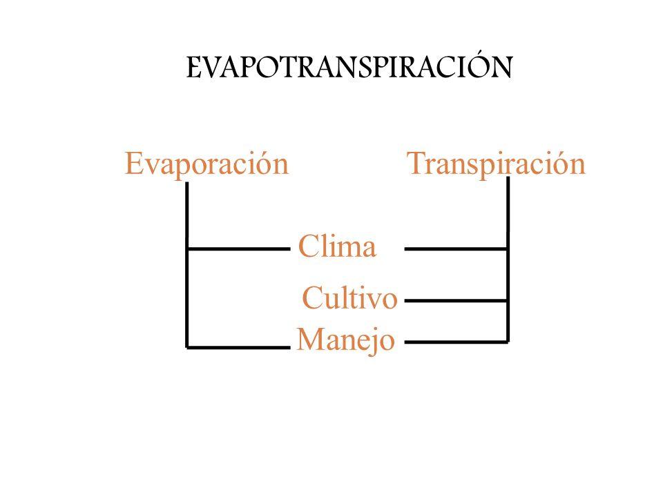 EVAPOTRANSPIRACIÓN Evaporación Transpiración Clima Cultivo Manejo