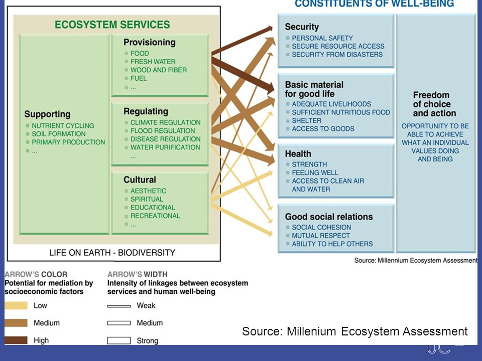 Source: Millenium Ecosystem Assessment