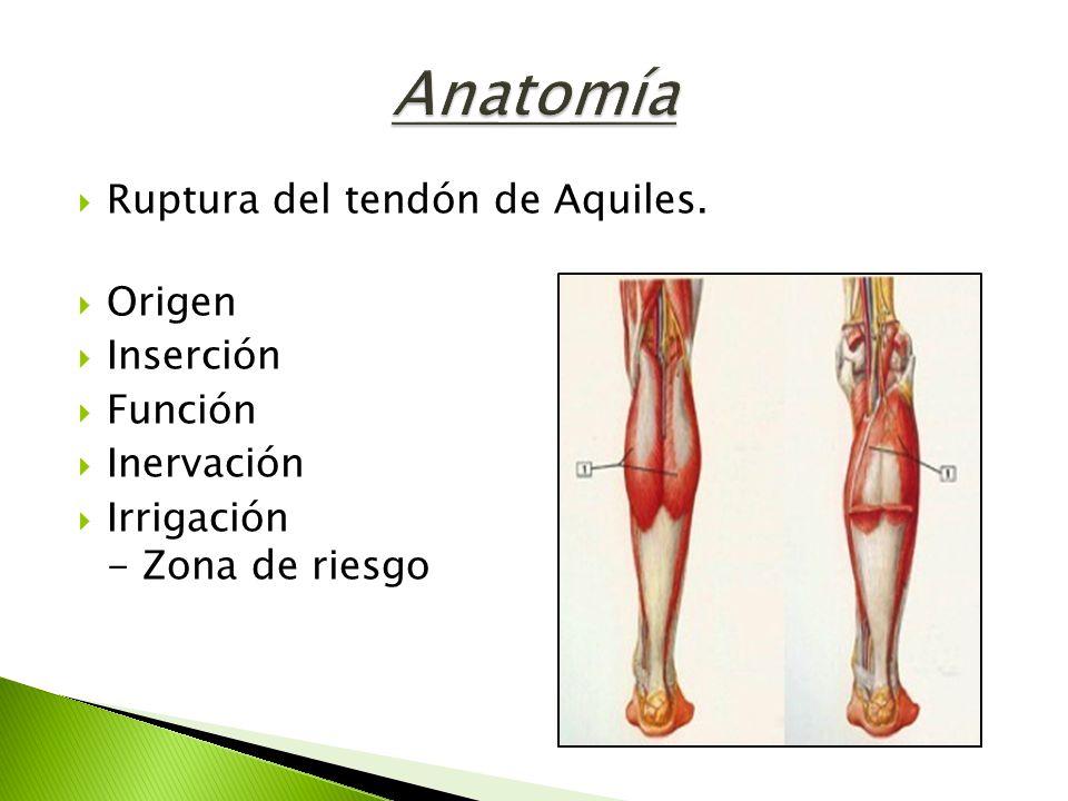 Hermosa Anatomía Del Talón Bandera - Anatomía de Las Imágenesdel ...