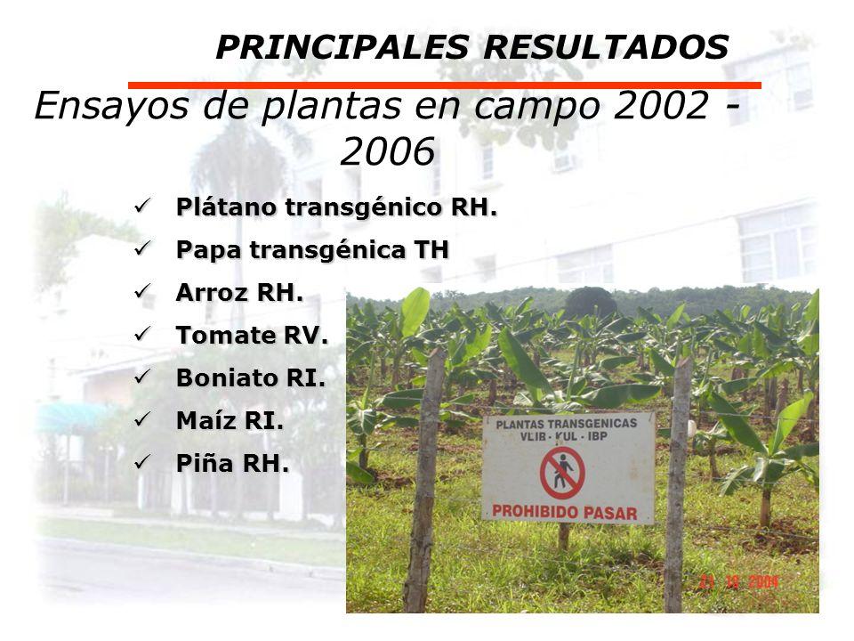 Ensayos de plantas en campo 2002 - 2006