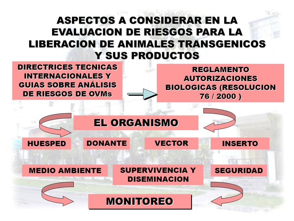ASPECTOS A CONSIDERAR EN LA EVALUACION DE RIESGOS PARA LA LIBERACION DE ANIMALES TRANSGENICOS Y SUS PRODUCTOS