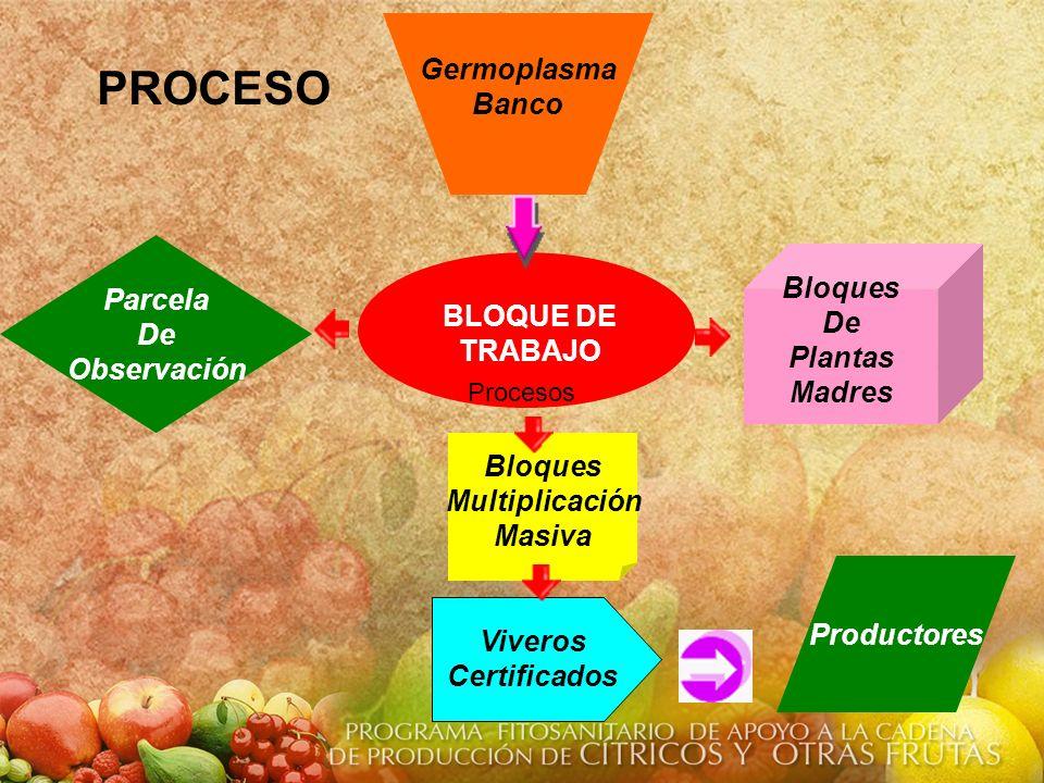 PROCESO Germoplasma Banco Parcela Bloques De De Observación Plantas