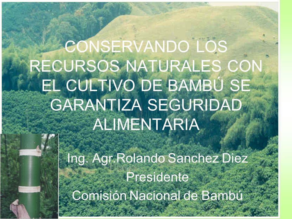 Ing. Agr.Rolando Sanchez Diez Presidente Comisión Nacional de Bambú