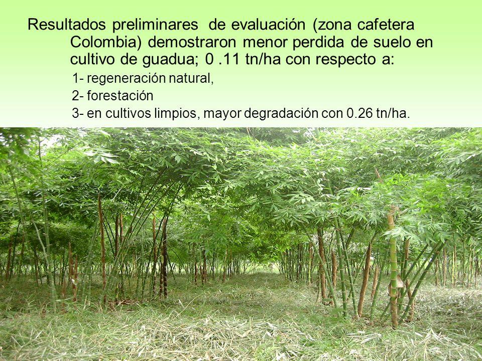 Resultados preliminares de evaluación (zona cafetera Colombia) demostraron menor perdida de suelo en cultivo de guadua; 0 .11 tn/ha con respecto a: