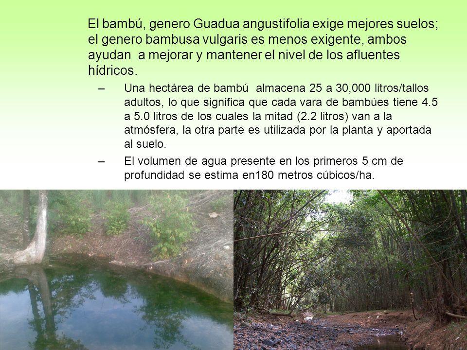 El bambú, genero Guadua angustifolia exige mejores suelos; el genero bambusa vulgaris es menos exigente, ambos ayudan a mejorar y mantener el nivel de los afluentes hídricos.