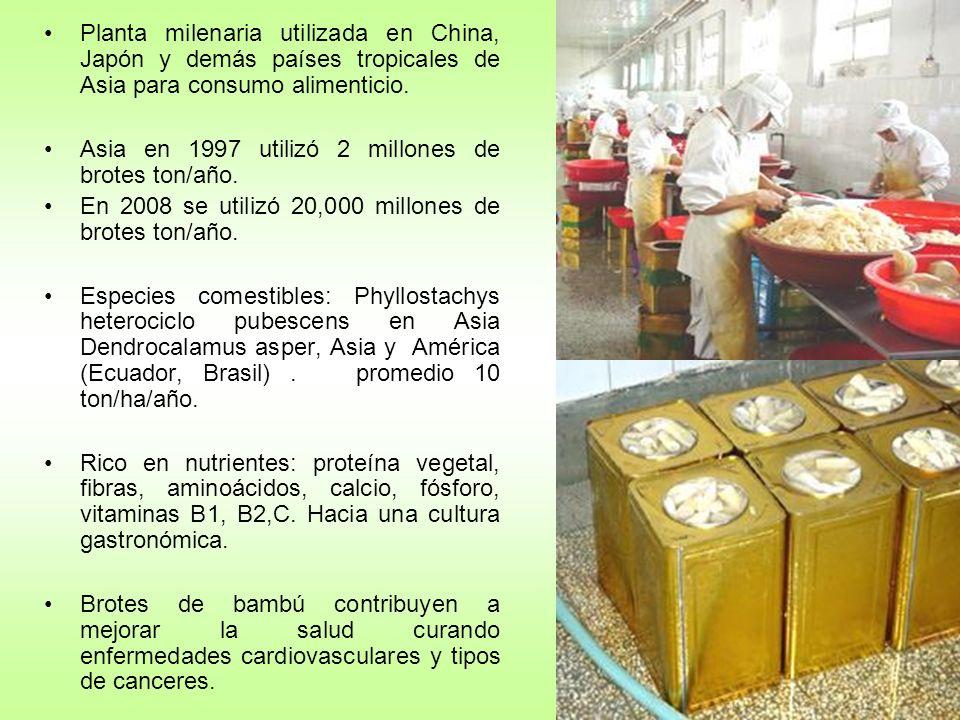 Planta milenaria utilizada en China, Japón y demás países tropicales de Asia para consumo alimenticio.