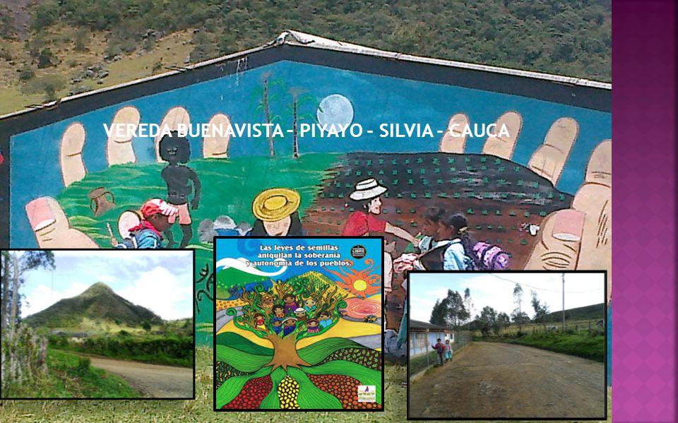 VEREDA BUENAVISTA – PIYAYO - SILVIA - CAUCA