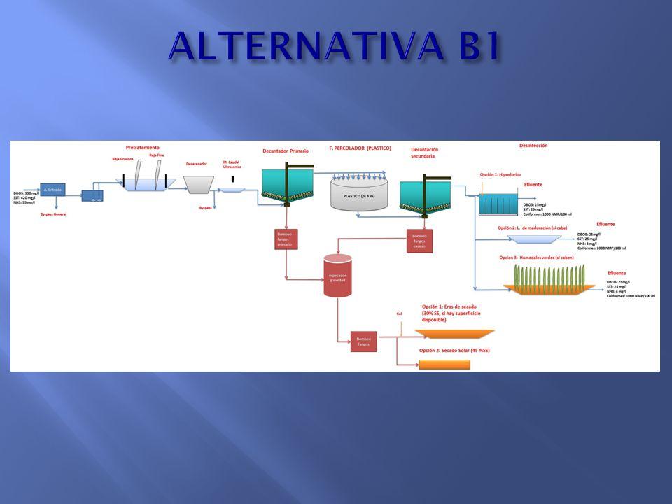 ALTERNATIVA B1