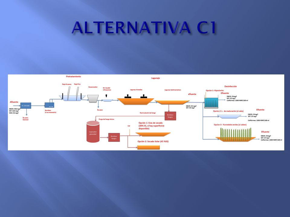 ALTERNATIVA C1