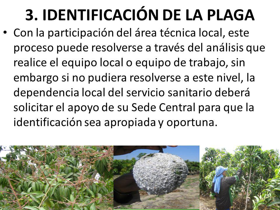 3. IDENTIFICACIÓN DE LA PLAGA