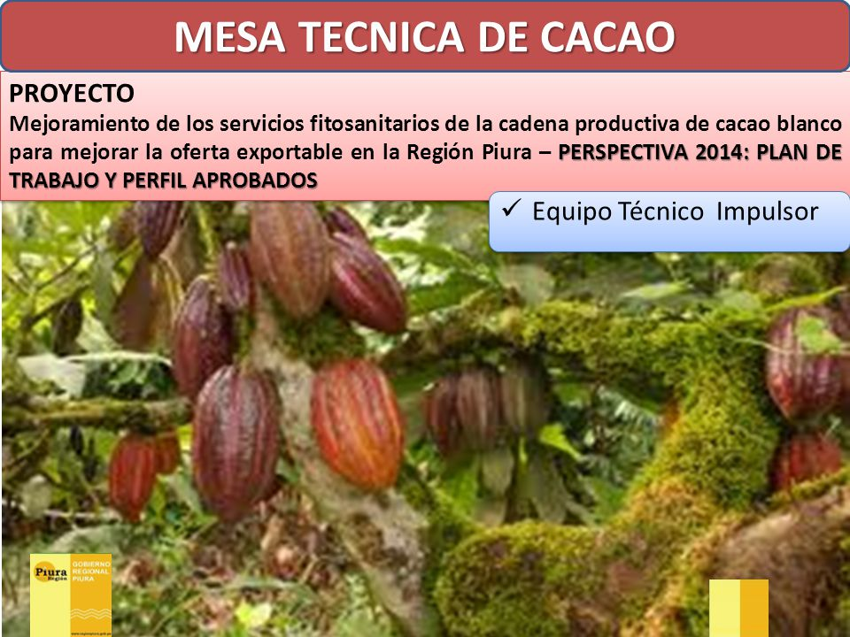 MESA TECNICA DE CACAO PROYECTO Equipo Técnico Impulsor