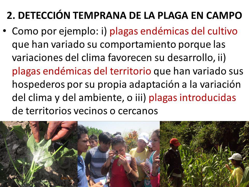 2. DETECCIÓN TEMPRANA DE LA PLAGA EN CAMPO