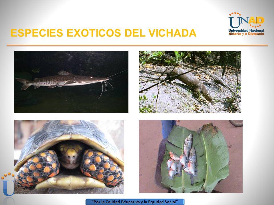 ESPECIES EXOTICOS DEL VICHADA